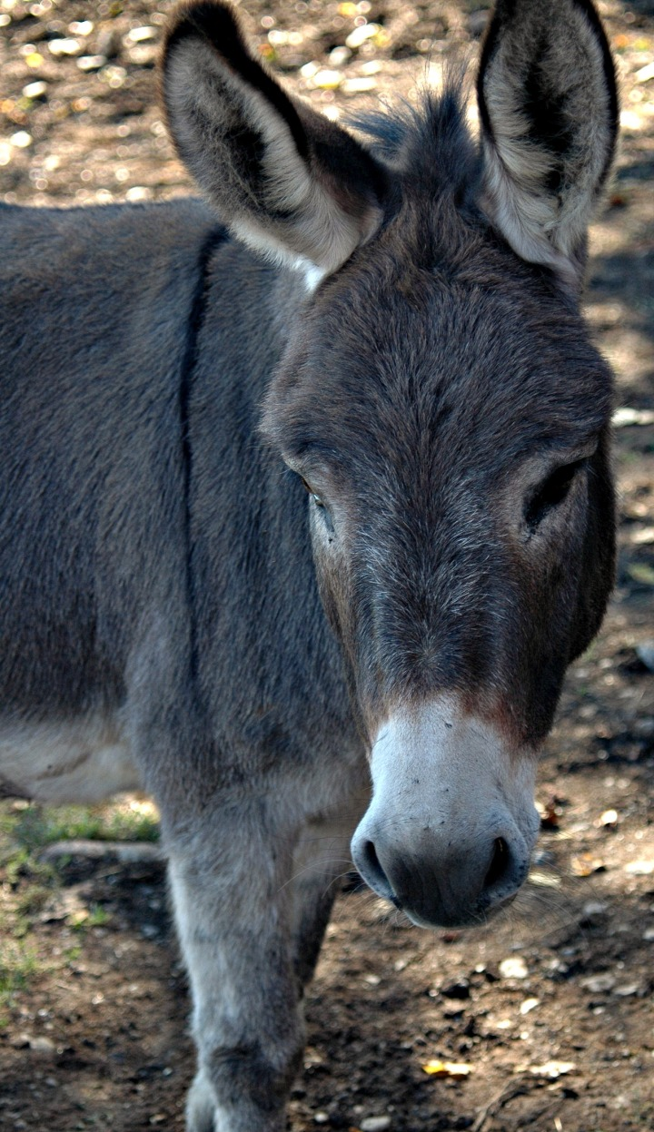Donkey I