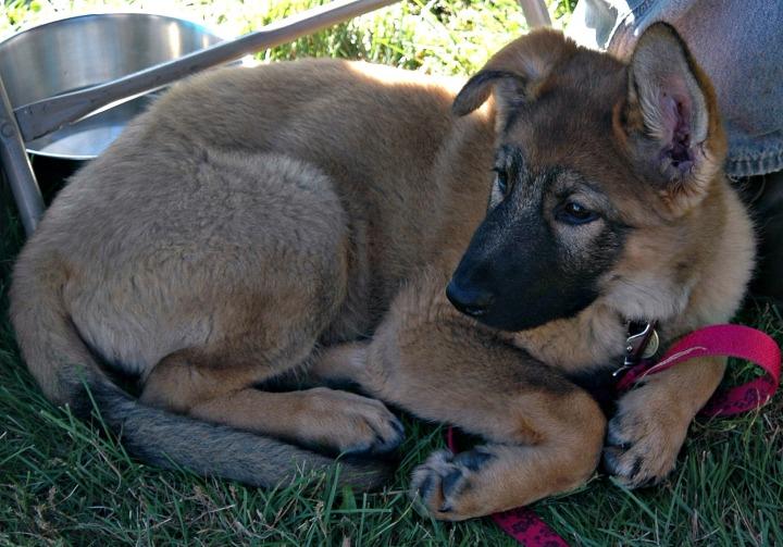 Puppy II