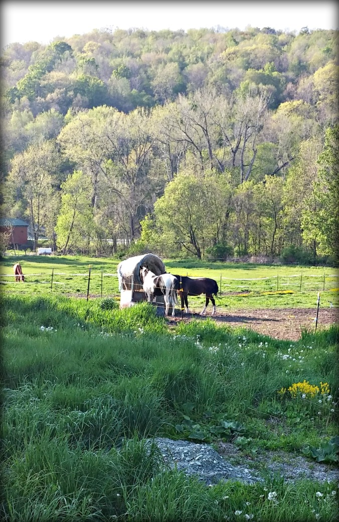 Horses on the Battenkill 1