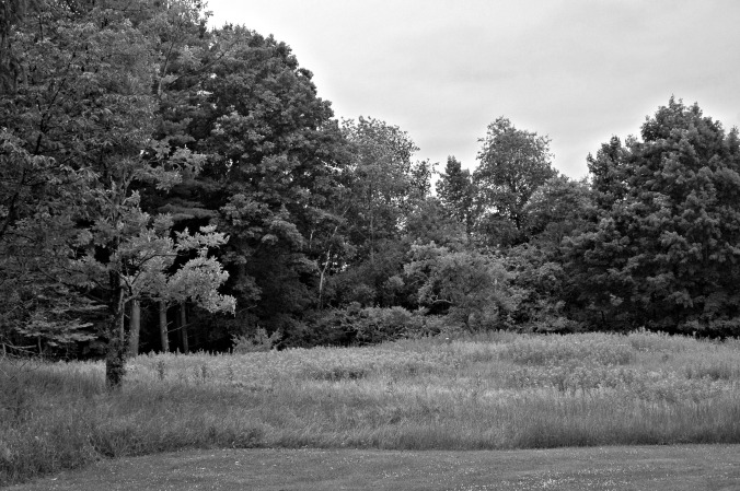 Robert Frost House Meadow and Wood 2