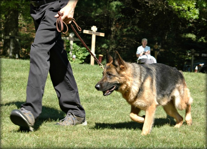New Skete GSD 6