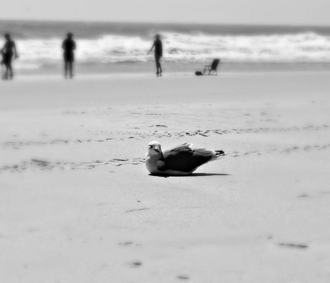 bird-at-rest-wrightsville-beach