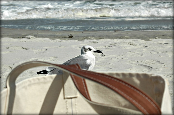 bird-considers-bag-at-wrightsville-beach