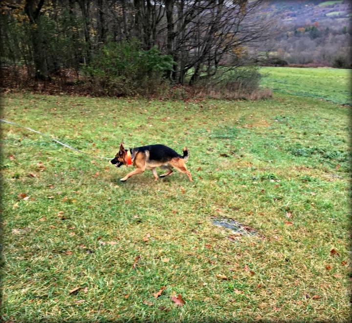 playful_warden_mile_around_woods