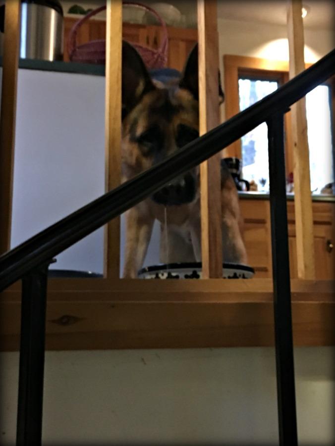 warden-basement-stairs