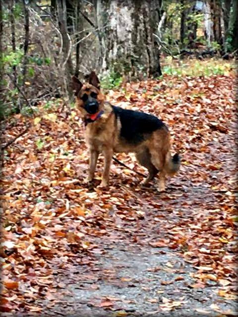 warden_head_tilt_mile_around_woods
