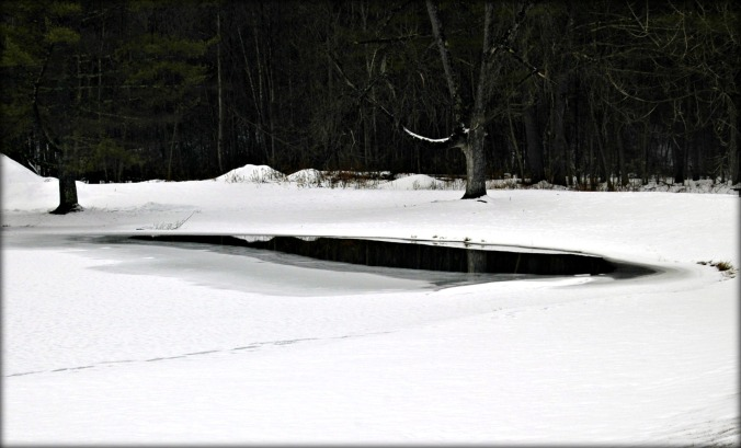 arlington_park_pond