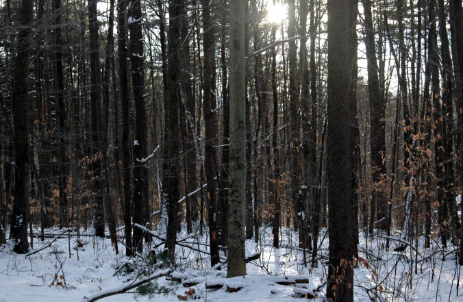 new_years_eve_woods_1