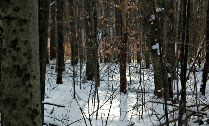 new_years_eve_woods_2