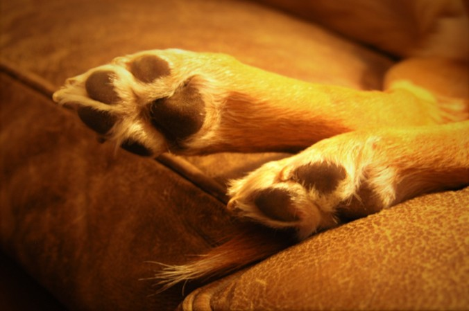 closeup of Scout's feet